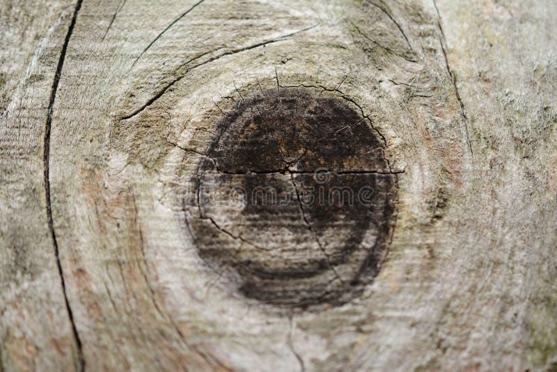 Backround en bois photo stock