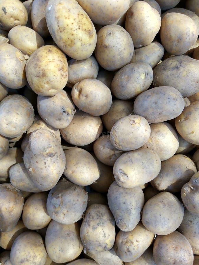 Backround med massor av potatisar royaltyfri bild