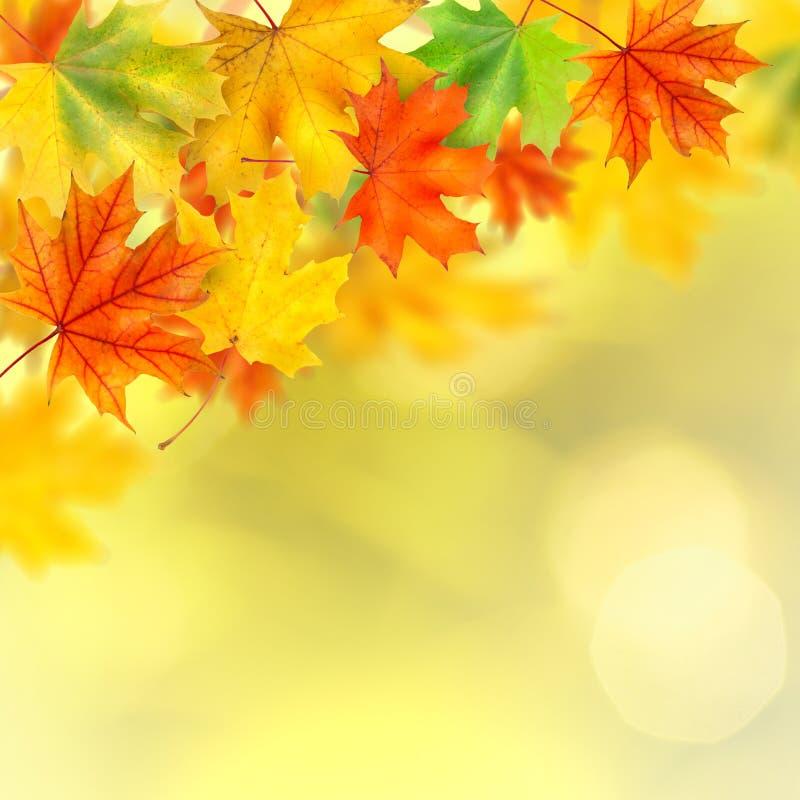 Backround mit Herbstblättern stockbild