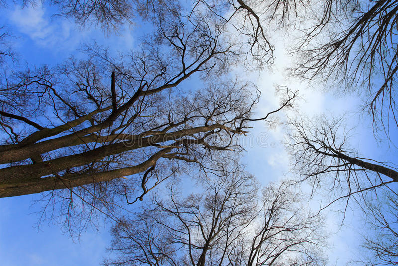 backroundtree royaltyfria foton