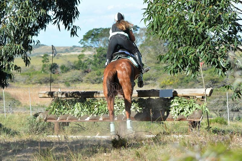 Backside of an Eventing equestrian. Caucasian junior Equestrian girl and her chestnut horse jumping over a fence on their cross-country track as part of their royalty free stock images