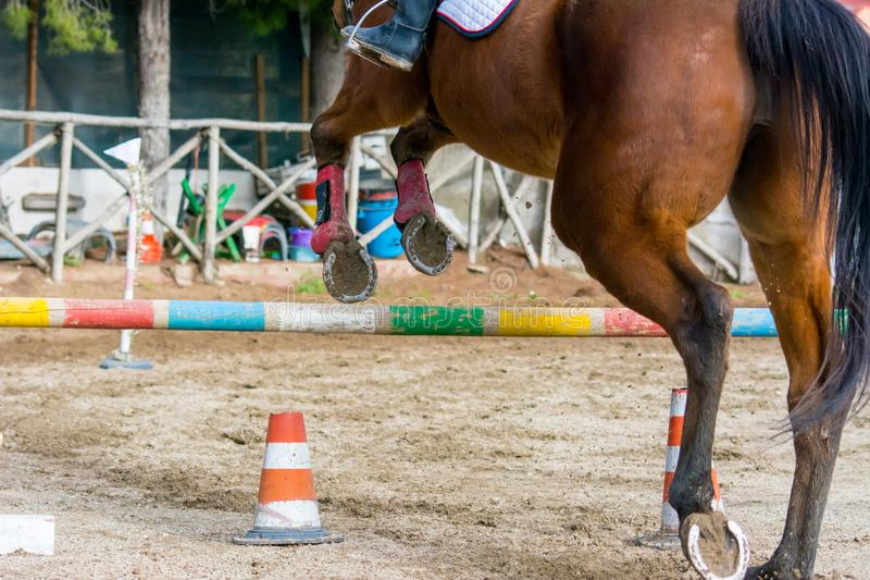 Backside Horizontal View Of A Brown Horse Jumping The Obstacle. During An Equestrian Competition On Blur Background royalty free stock images