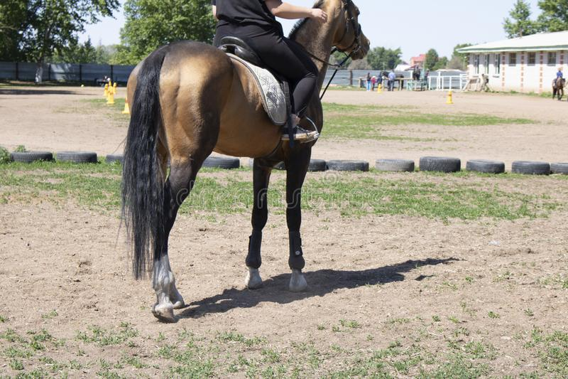 Backside horse, jockey rides a stallion, grass and wheels around royalty free stock images