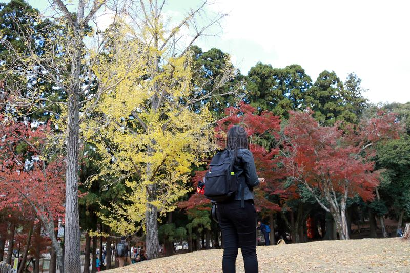 Backside of tourist girl in black dress and backpack, standing at Kasugano-enchi Park on autumn with yellow and red tree. royalty free stock images