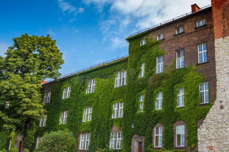 Backsteinhaus mit der Vorderseite bedeckt durch grünen Efeu stockfoto