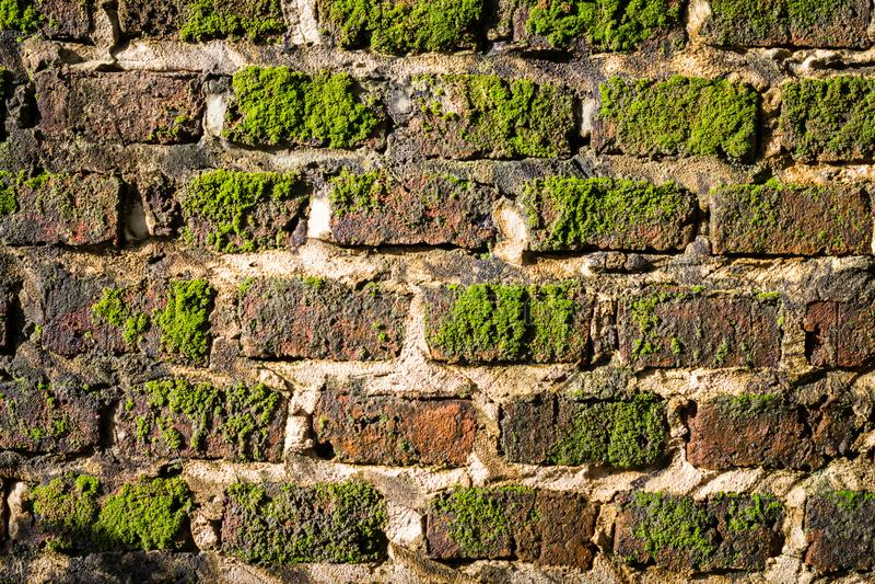Backsteinmauer mit dem Moos, das aus ihm heraus wächst lizenzfreie stockfotografie