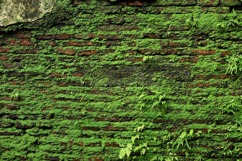 Backsteinmauer mit dem Moos, das aus ihm heraus wächst lizenzfreies stockbild