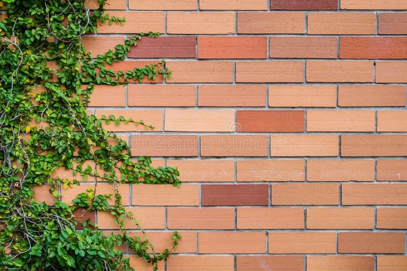 Backsteinmauerbeschaffenheit mit Anlagen als Hintergrund lizenzfreies stockbild