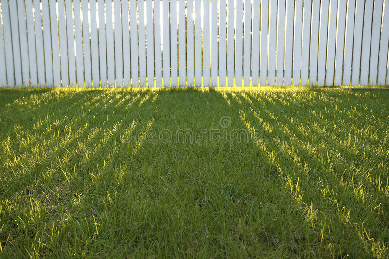 Backyard stock photography