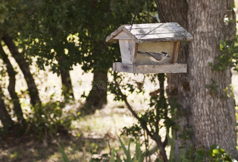 Backyard Bird Feeder with bird. Eating seeds royalty free stock photos