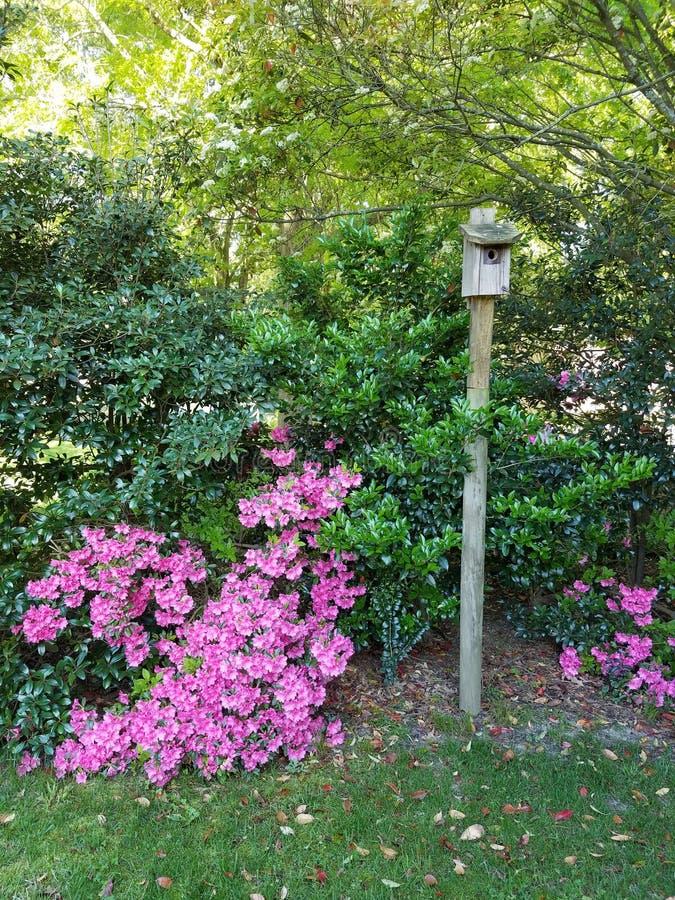 Backyard Birdhouse royalty-vrije stock foto
