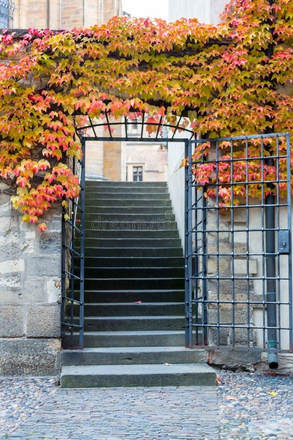 Backyard door gate entrance with wild grape vine.  royalty free stock image