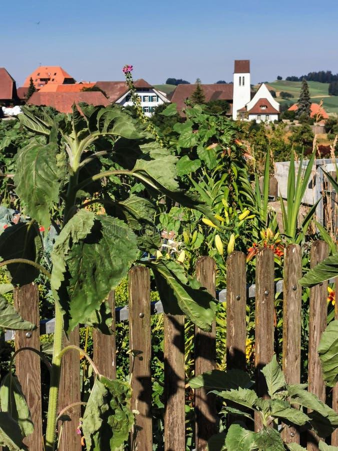 Free Backyard Garden In The Emmental Switzerland Stock Photos - 162374353