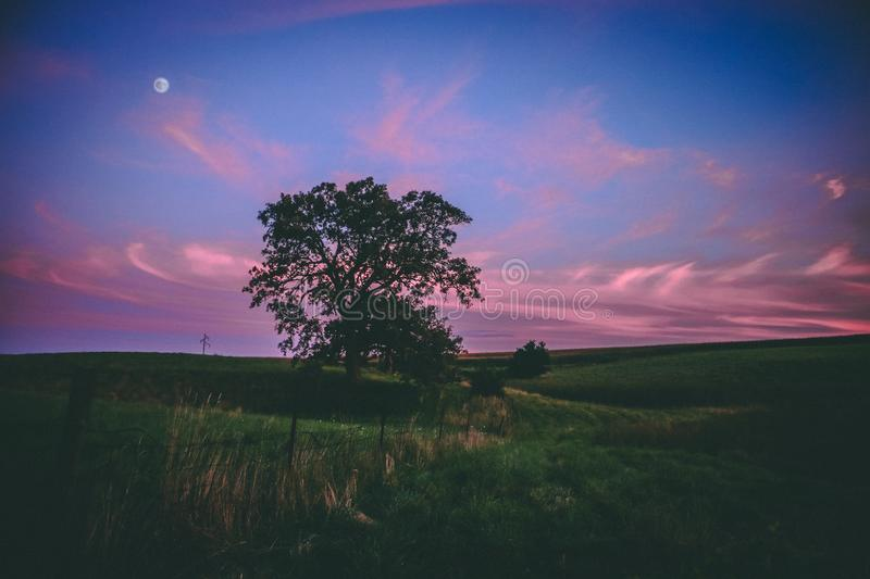 Sunset over Epic Tree in Midwest. In the backyard of a midwest property, an epic looking tree stands below a moonlit sky with epic cloud formations royalty free stock images