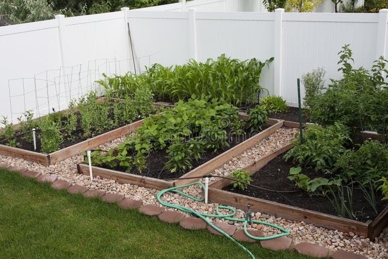 Backyard Organic Vegetable Garden royalty free stock image