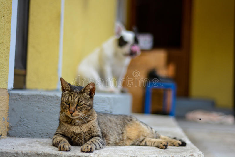 Backyard pets chilling stock photography