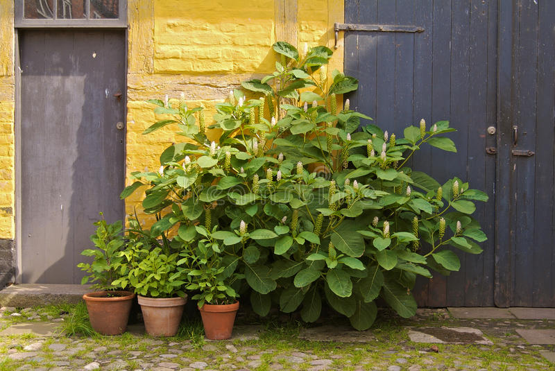 Download Backyard with plants stock image. Image of single, color - 10452299