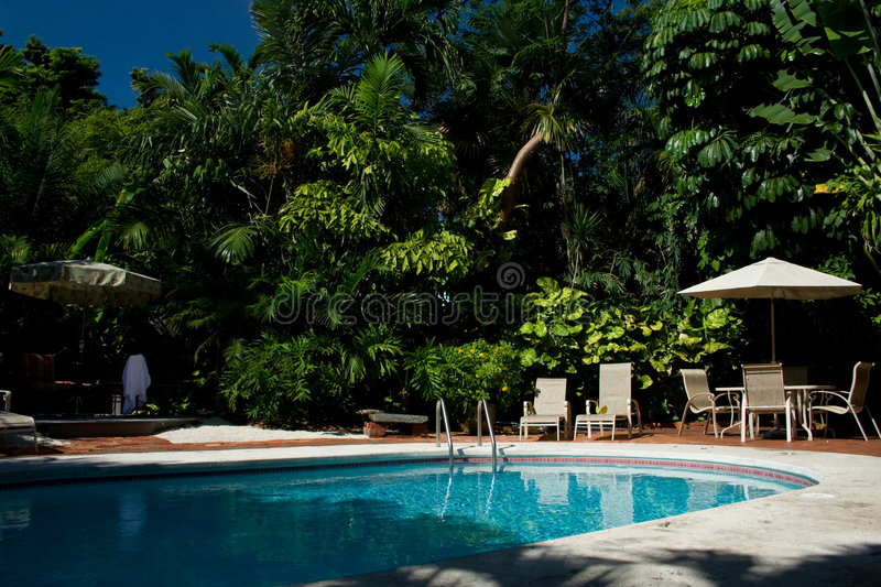 Backyard Pool With Palm Trees Stock Image Image Of