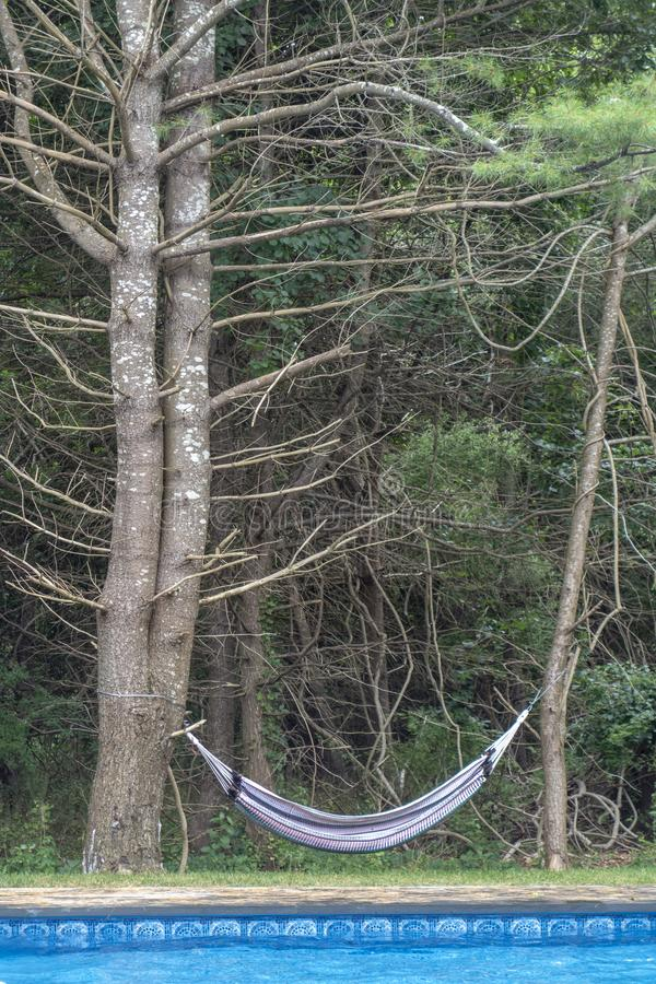 A backyard poolside Hammock hanging off two trees. A backyard Hammock hanging off two trees royalty free stock photos