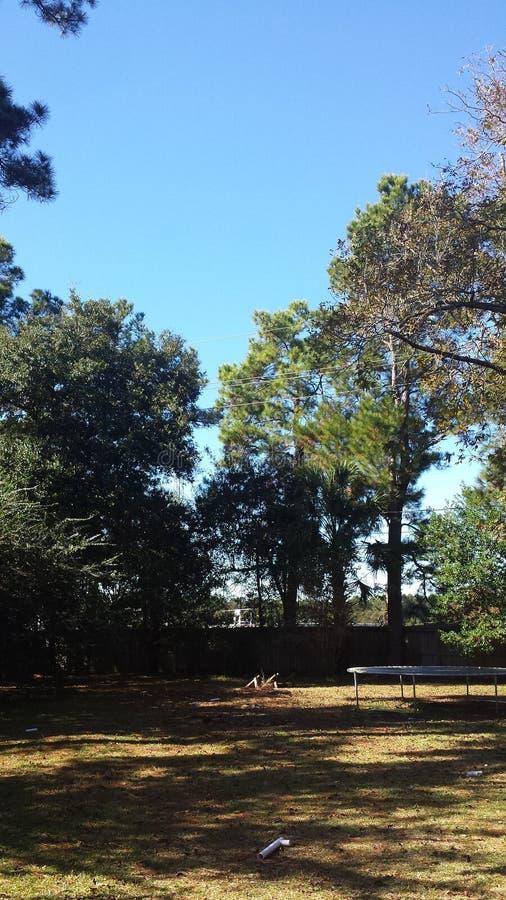 Backyard tree scape stock photography