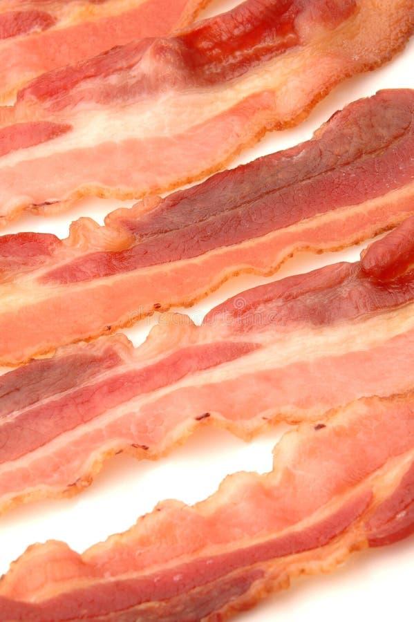 Bacon 520 imagem de stock