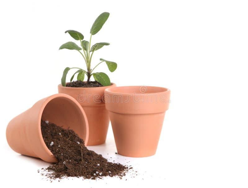 Bacs d'argile avec la saleté et la plante image stock