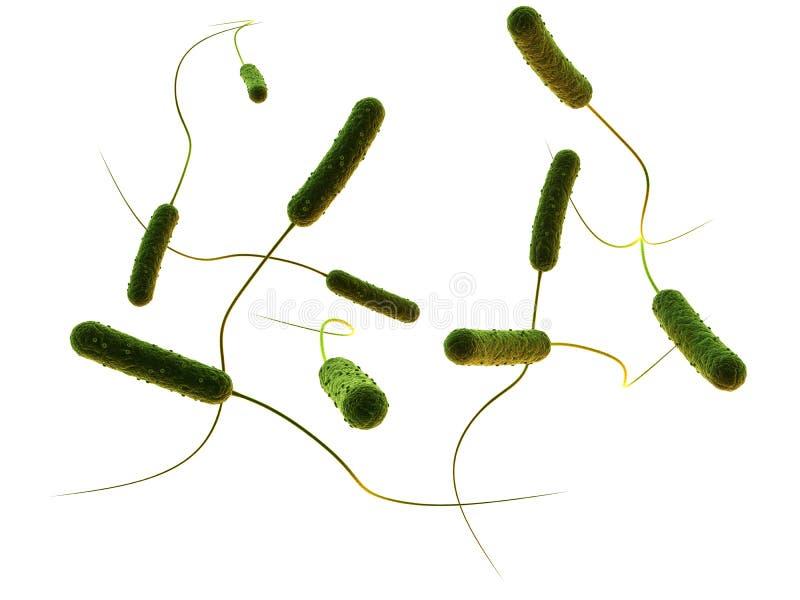 Bactérias dadas forma Rod ilustração royalty free