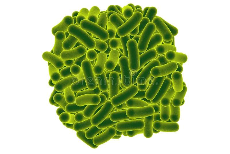 Bactérias dadas forma Rod ilustração stock