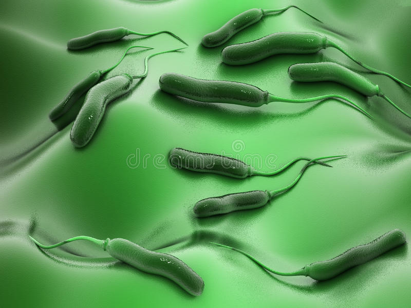 Bactérias de E coli imagens de stock