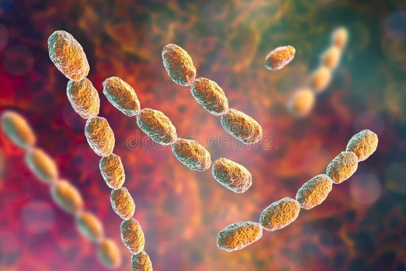 Bactérias do ducreyi de Haemophilus ilustração do vetor