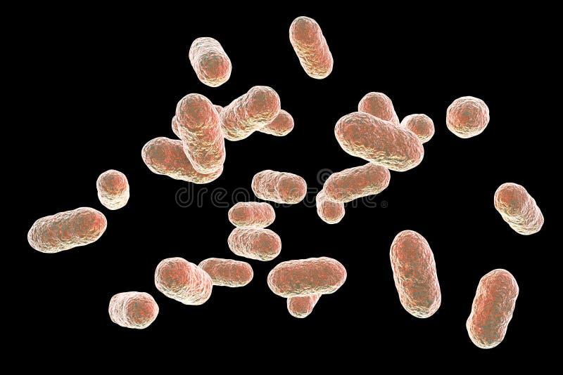 Bactérias dos gingivalis de Porphyromonas ilustração stock