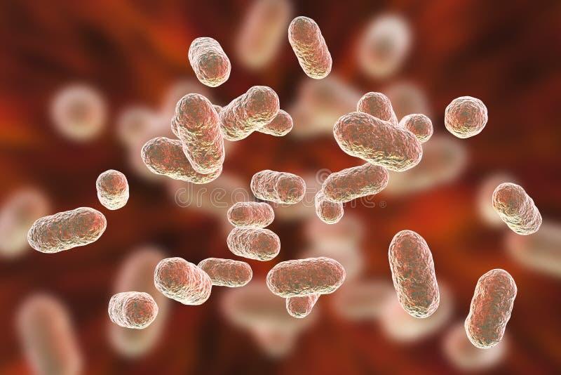 Bactérias dos gingivalis de Porphyromonas ilustração royalty free