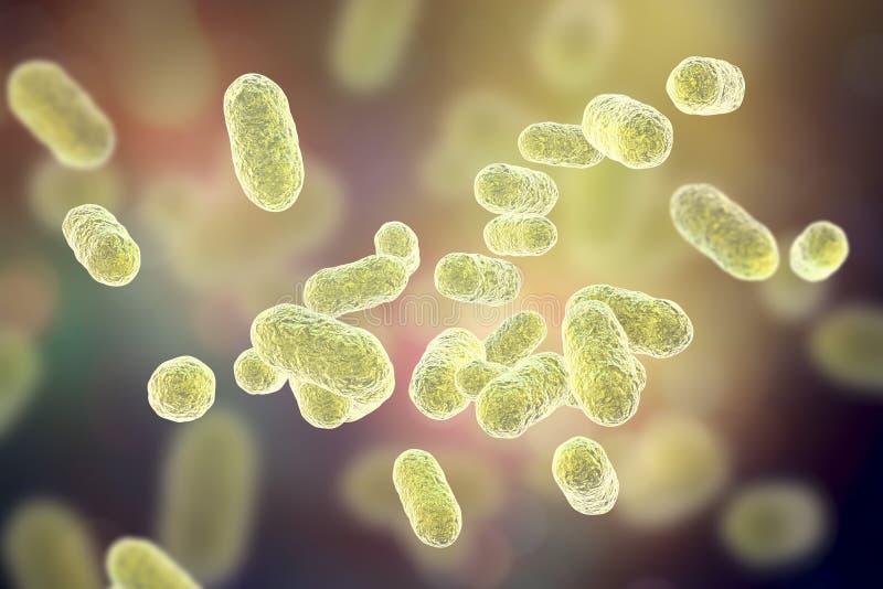 Bactérias dos gingivalis de Porphyromonas ilustração do vetor