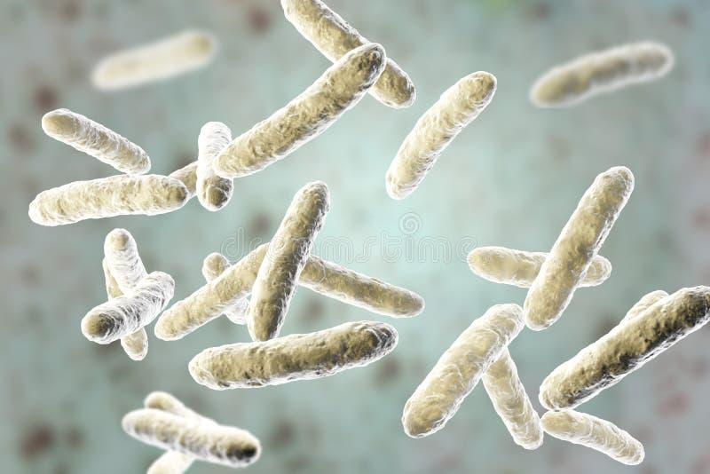 Bactérias probióticos, microflora intestinal normal ilustração stock