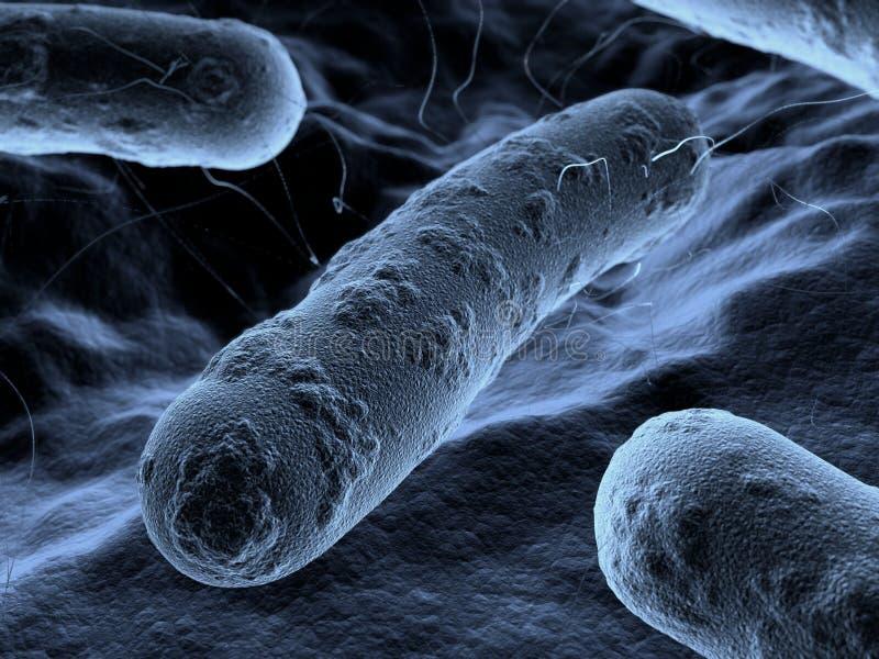 Bactérias vistas sob um microscópio de exploração ilustração stock