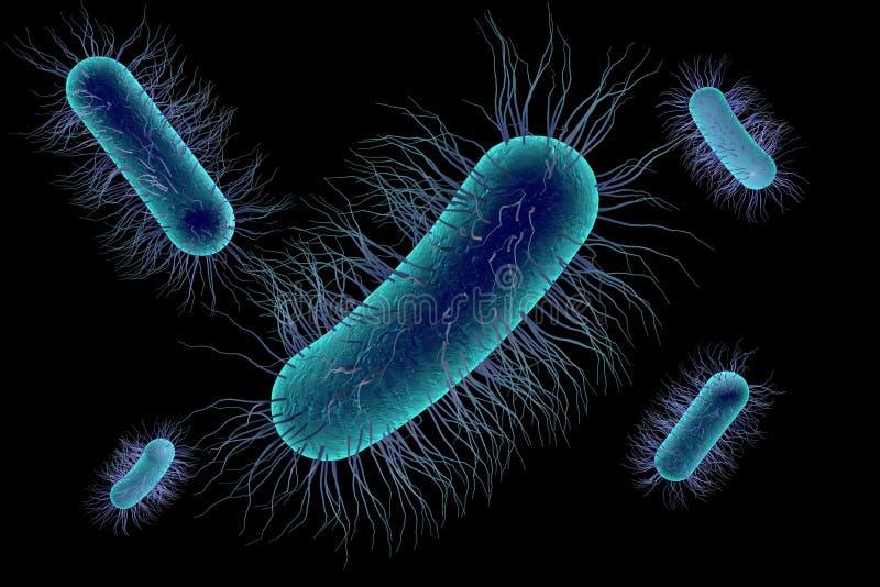 Bactérie d'Escherichia coli illustration stock