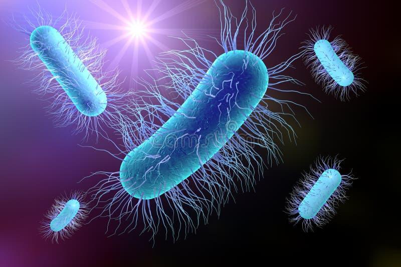 Bactérie d'Escherichia coli illustration de vecteur