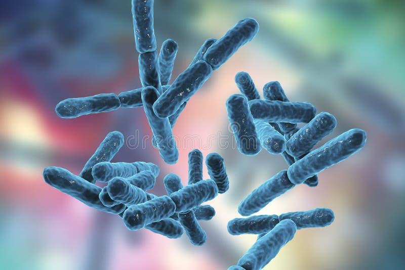 Bactéries Bifidobacterium, bactéries en forme de tige anaérobies grampositives illustration stock