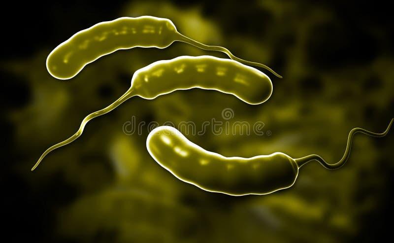 Bactéries d'E coli illustration stock