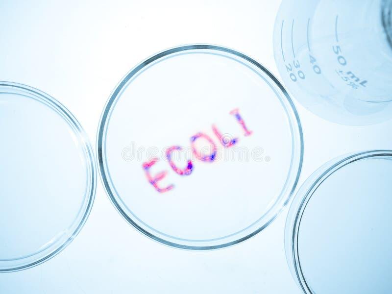 Bactéries d'Ecoli photos stock