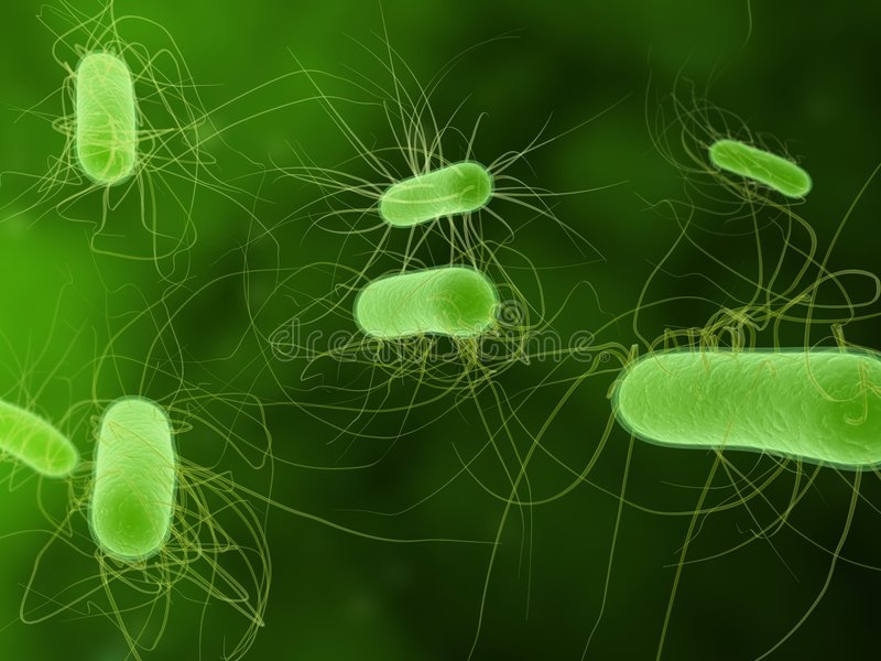 Bactéries d'Escherichia coli illustration de vecteur