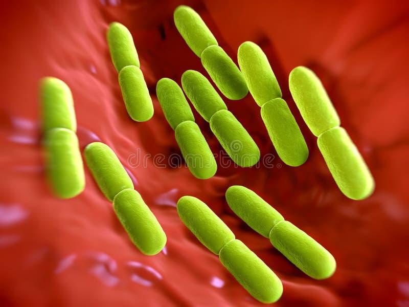 Bactéries de Lactobacillus bulgaricus illustration stock