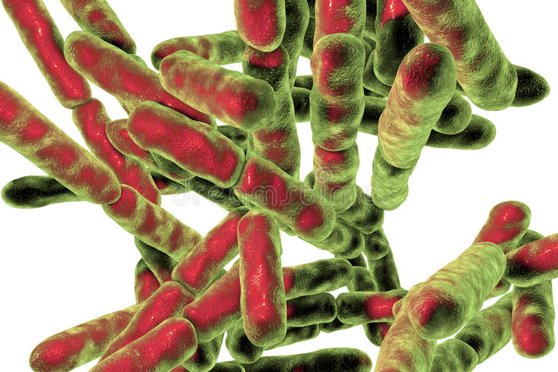 Bactéries Probiotic Bifidobacterium photo stock
