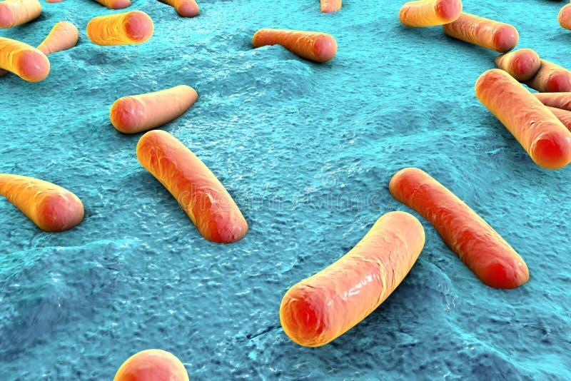 Bactéries sur la surface de la peau, de la muqueuse ou de l'intestin illustration stock