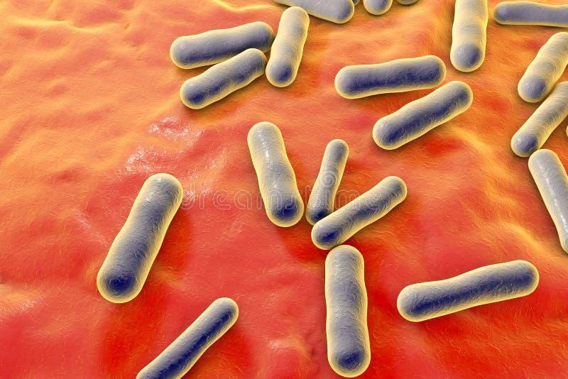 Bacteriën die acne veroorzaken stock foto's