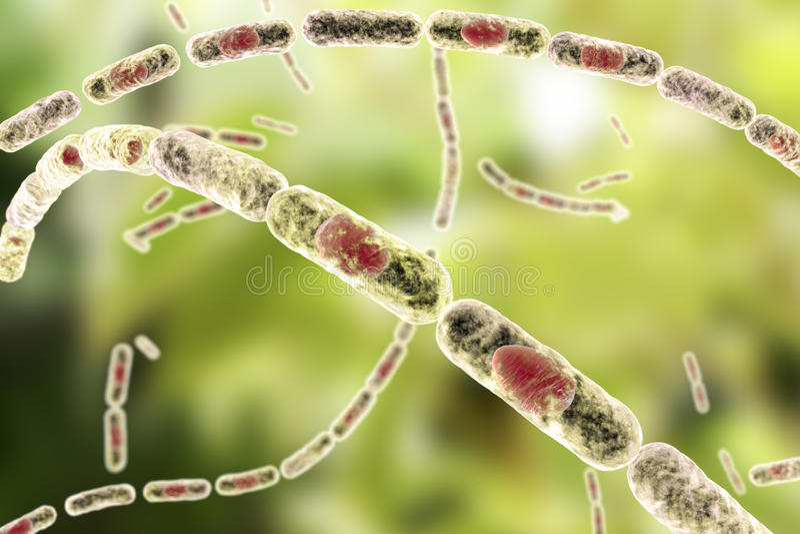Bacteriënbacil anthracis royalty-vrije illustratie
