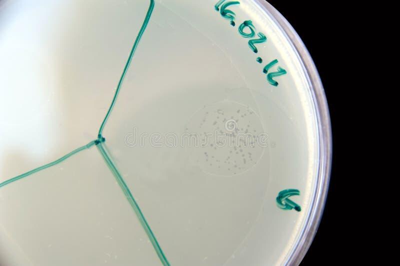 Bacteriófago fotografia de stock royalty free