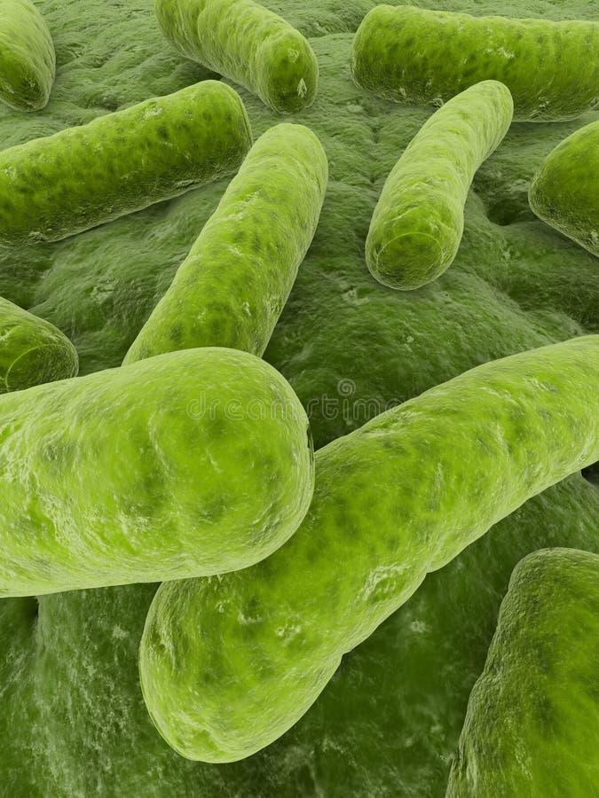 bacterias 3d ilustración del vector