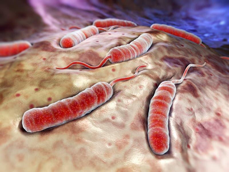 Bacterias de Cholerae ilustración del vector