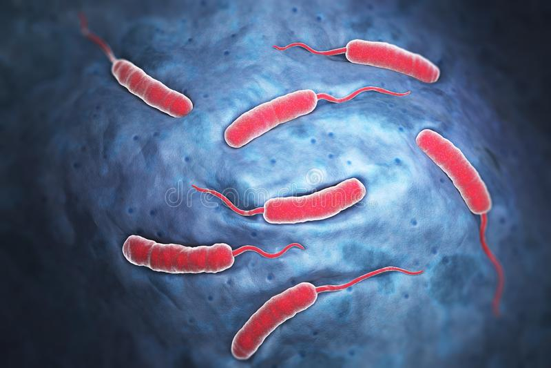 Bacterias de Cholerae que causa el cólera ilustración del vector